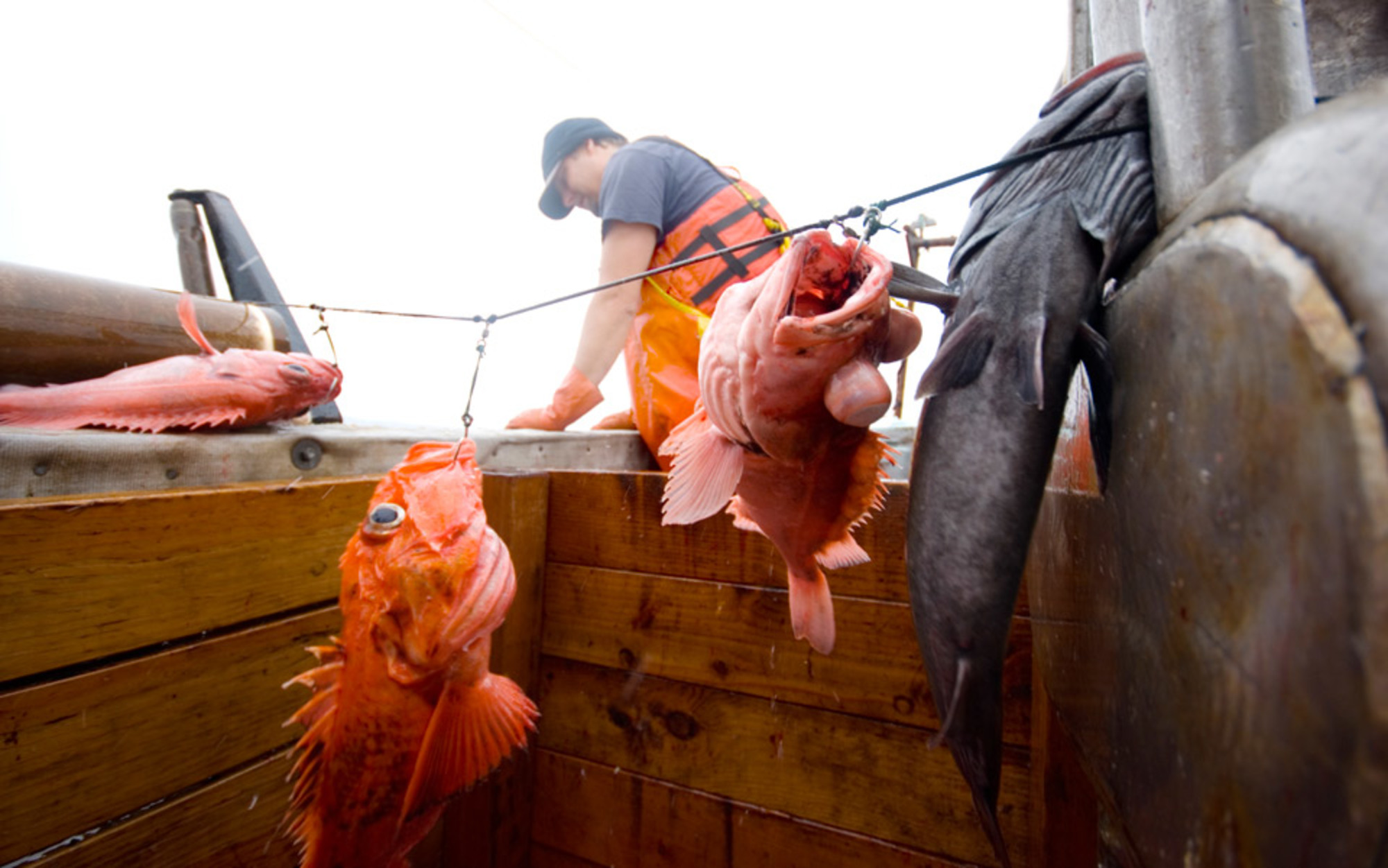 fishing essay topics how the ocean s devastated fisheries could come back to life aeon essays