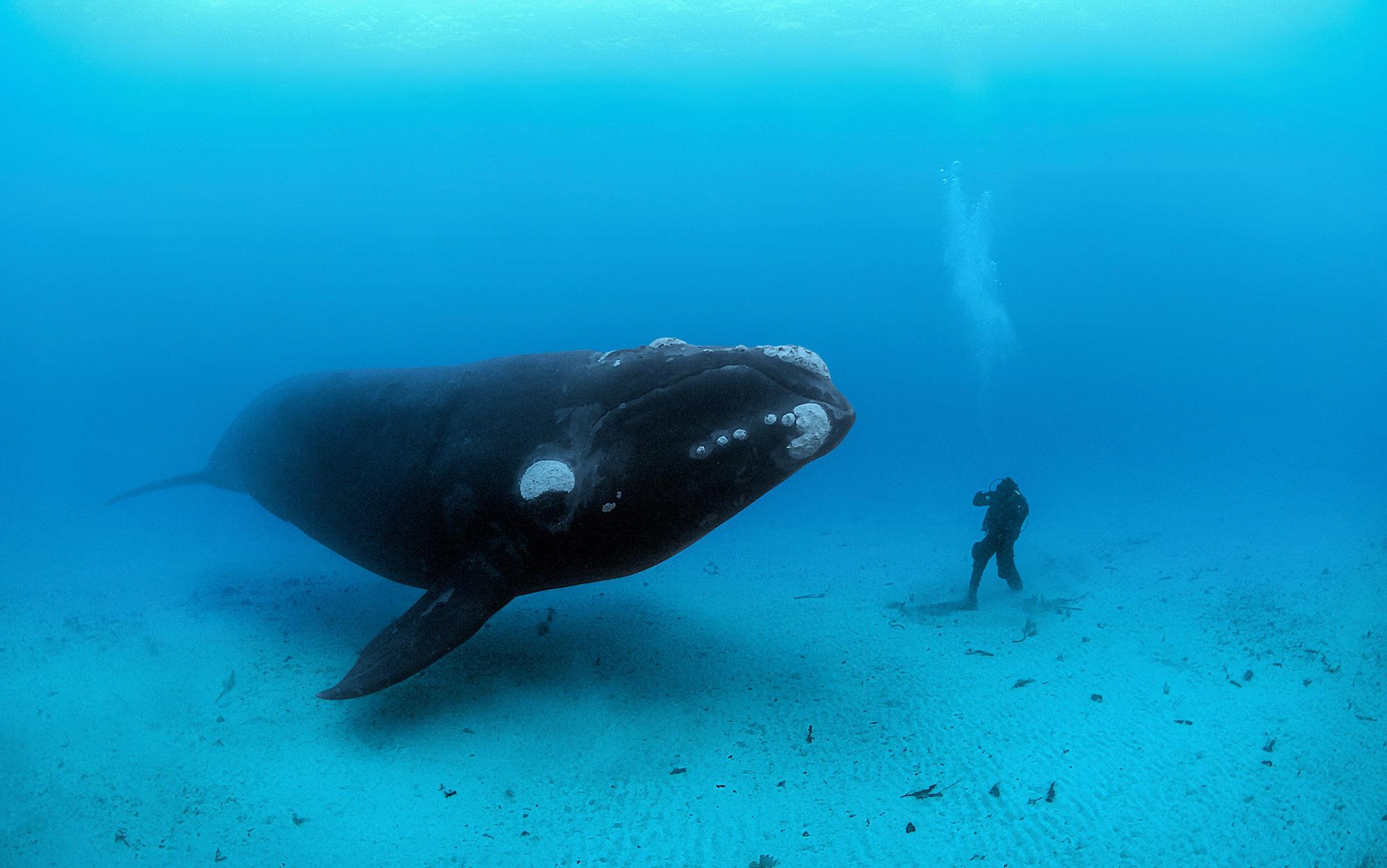 The whale's return | Aeon