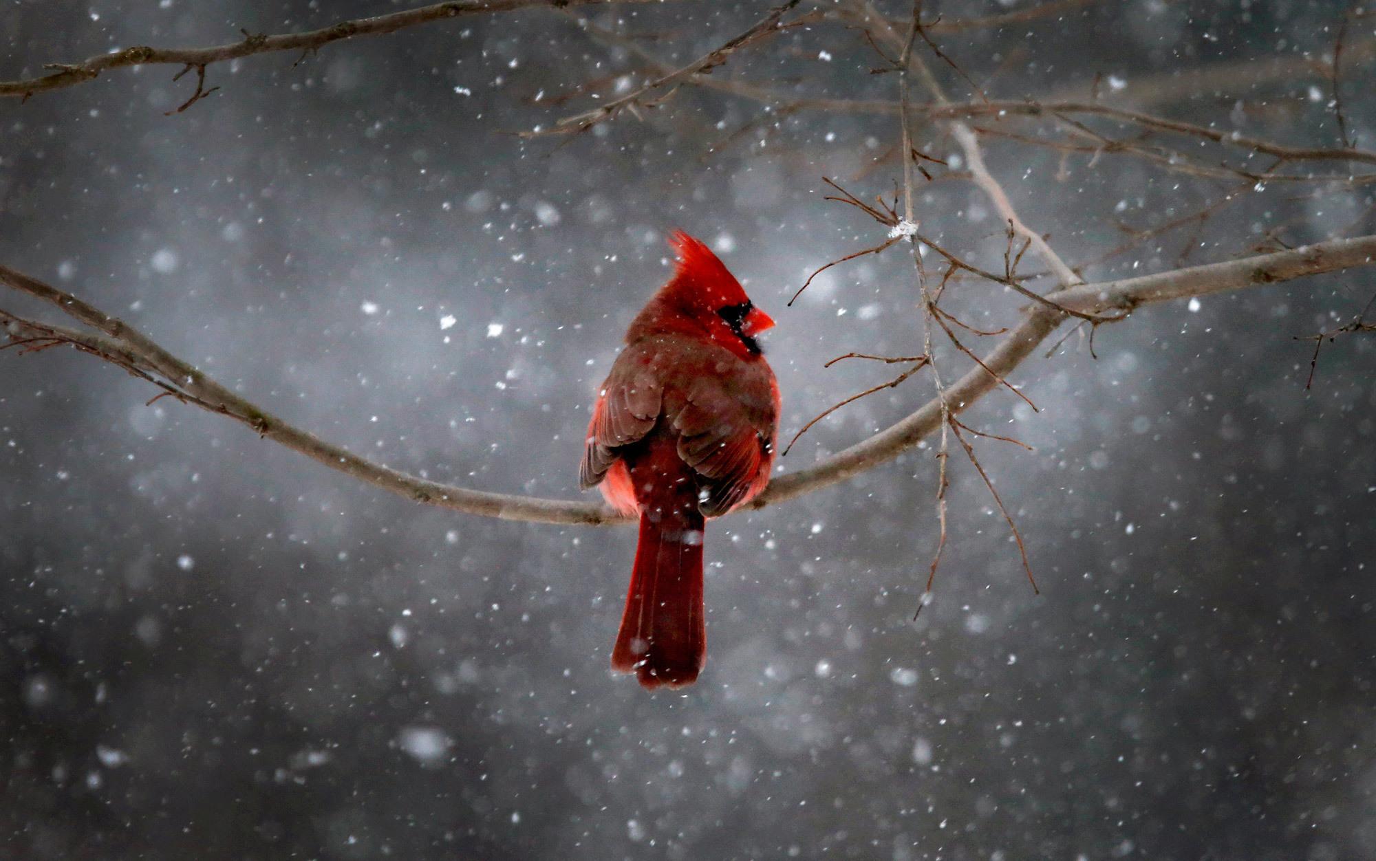 Birdland | Aeon