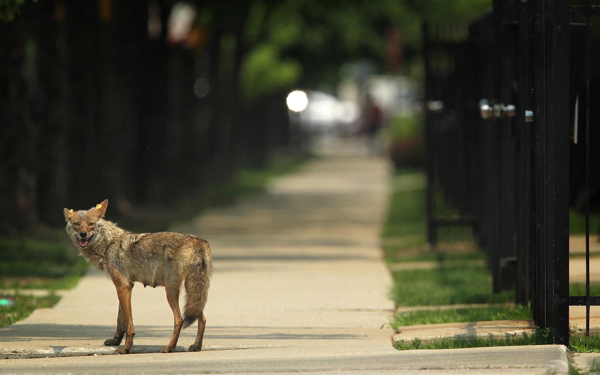 urban sprawl and wildlife essay