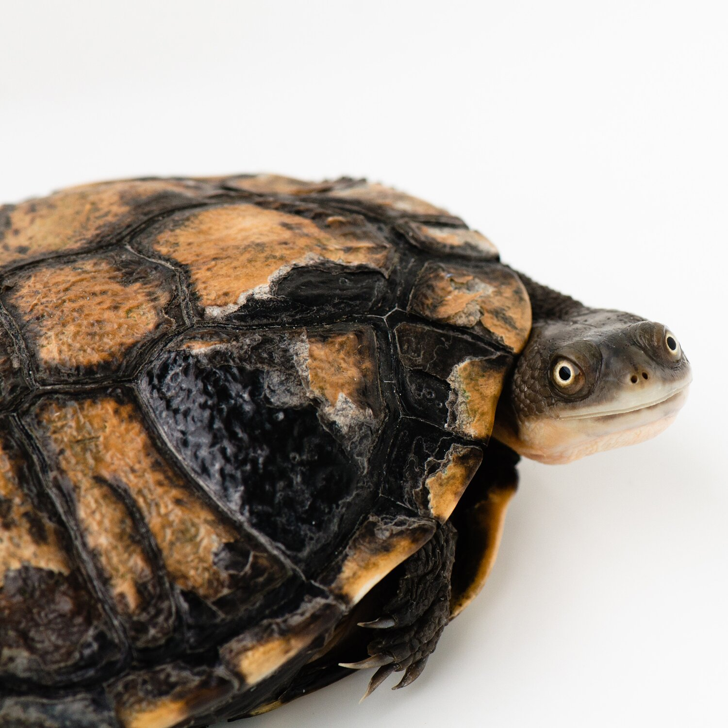 How to come out of your shell | Psyche