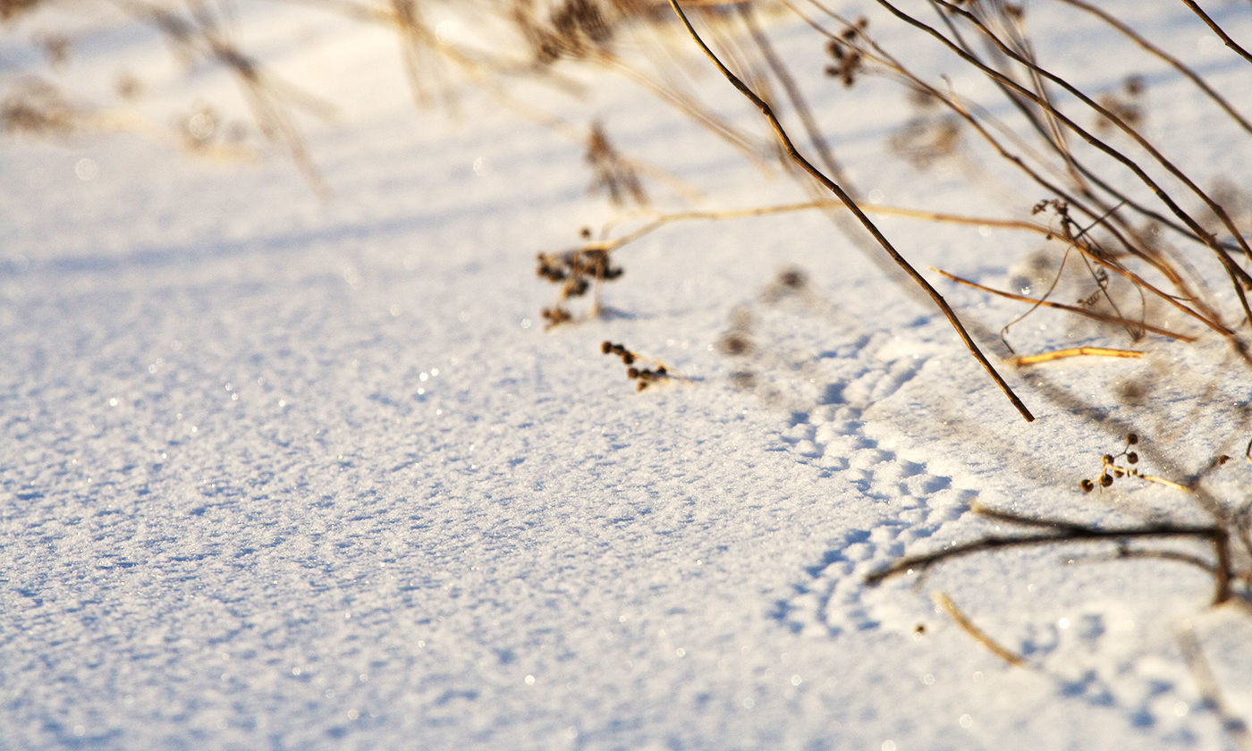 Little tracks. <em>Photo Matt MacGillivray/Flickr</em>