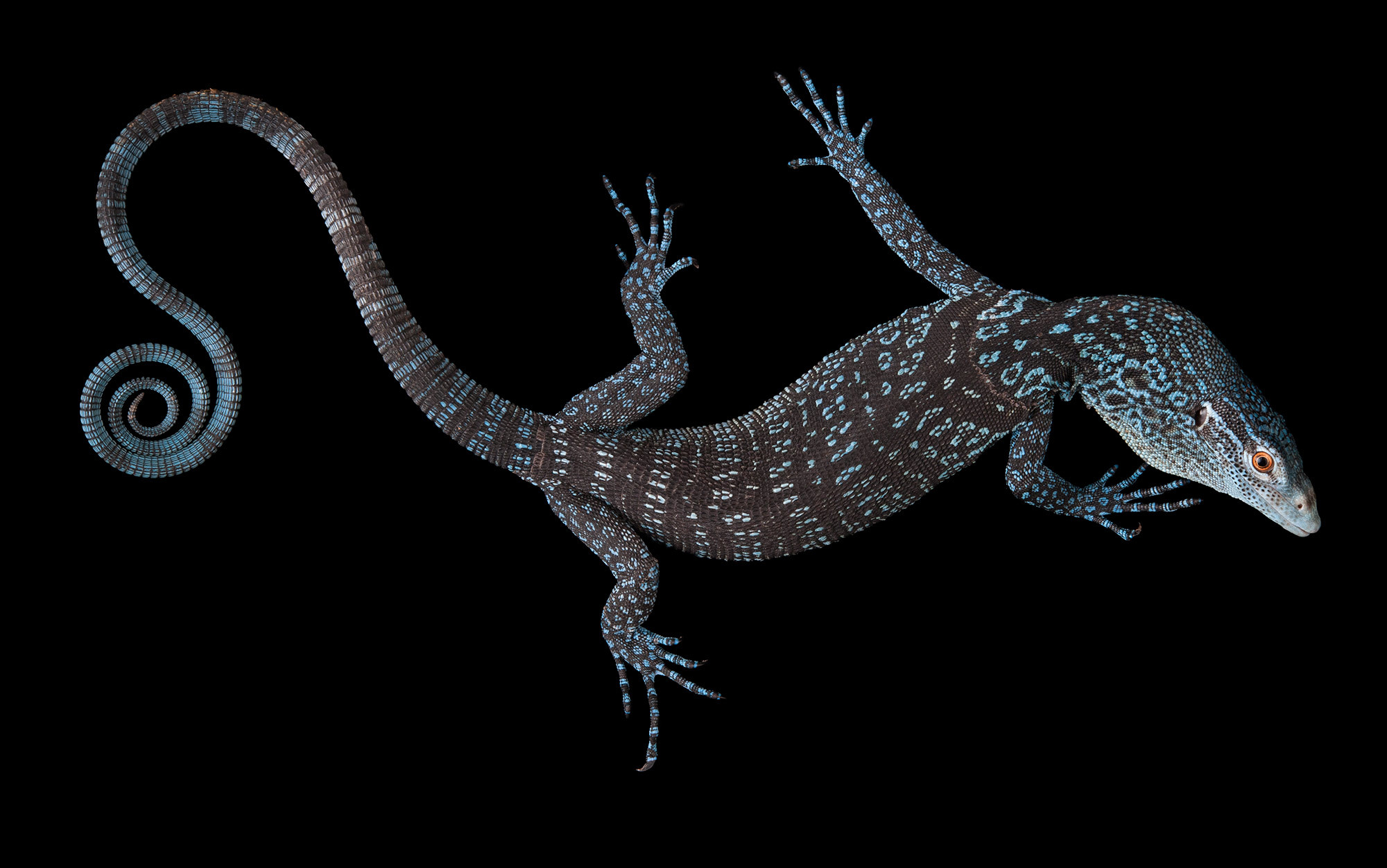 The lizard inside | Aeon