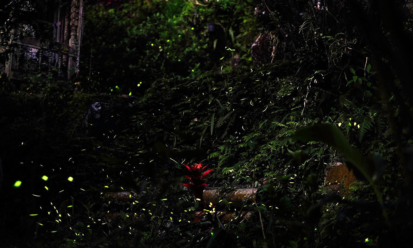<p>Yu Jheng Fang/Flickr</p>