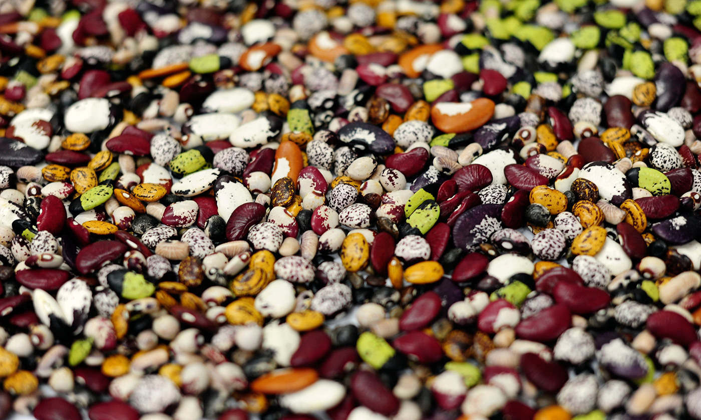 <p>From diverse seeds. Beans at the CIAT genebank in Colombia. <em>Photo by CIAT/Flickr </em></p>