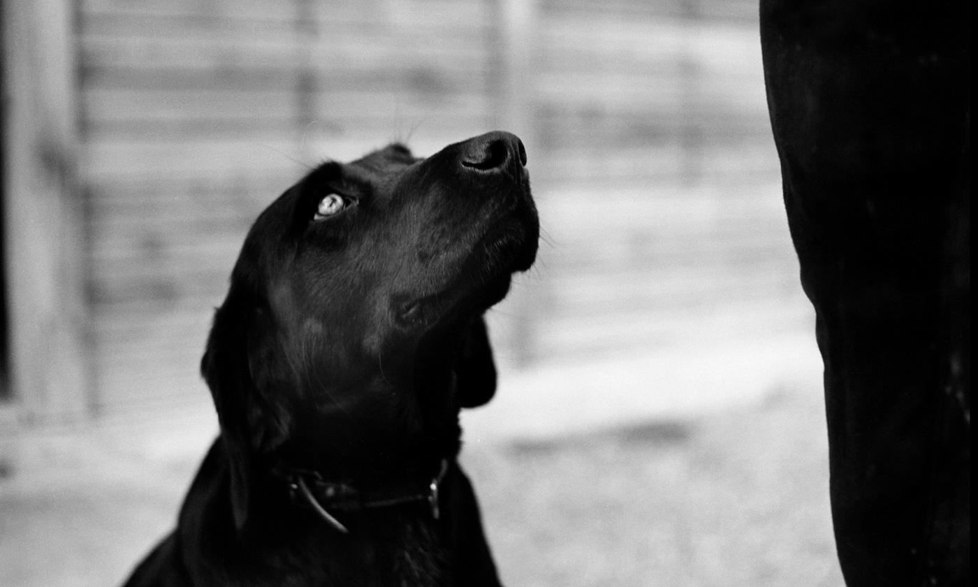 Canine exceptionalism   Aeon