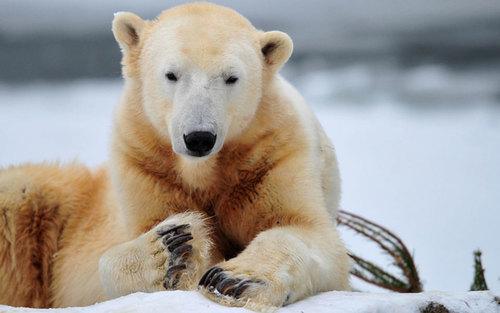 Who killed Knut? | Aeon