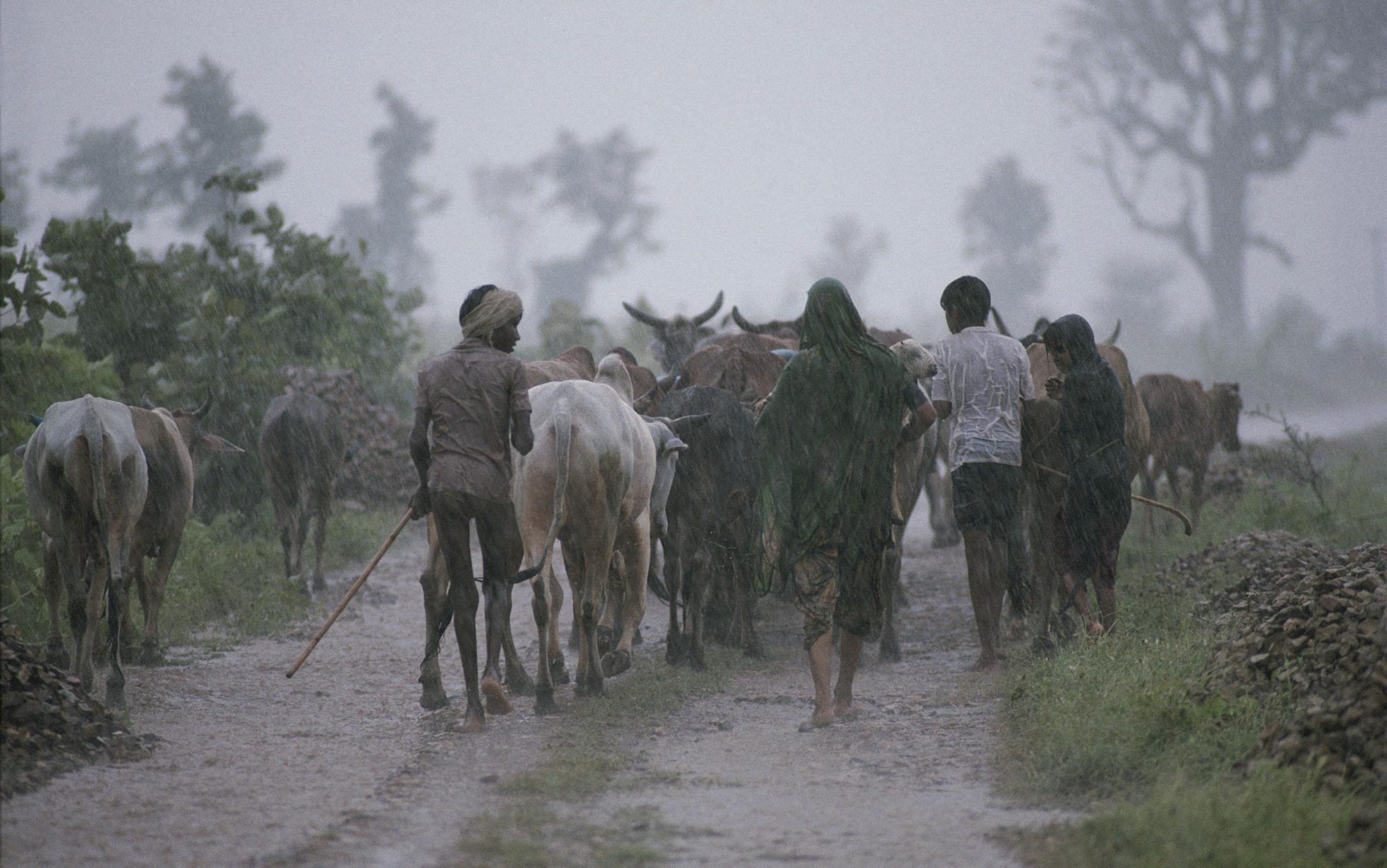 When the monsoon goes away | Aeon