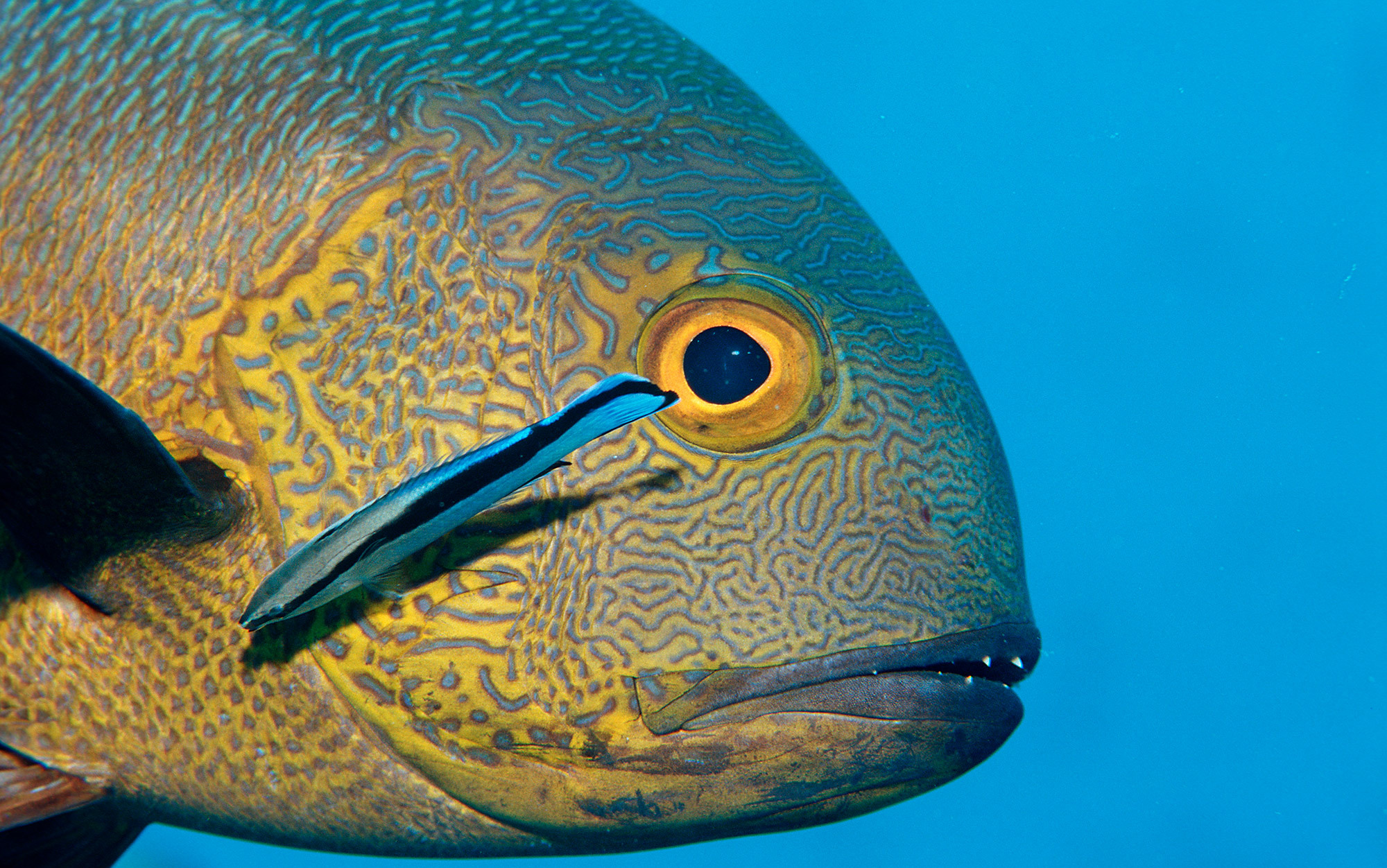The face of the fish   Aeon