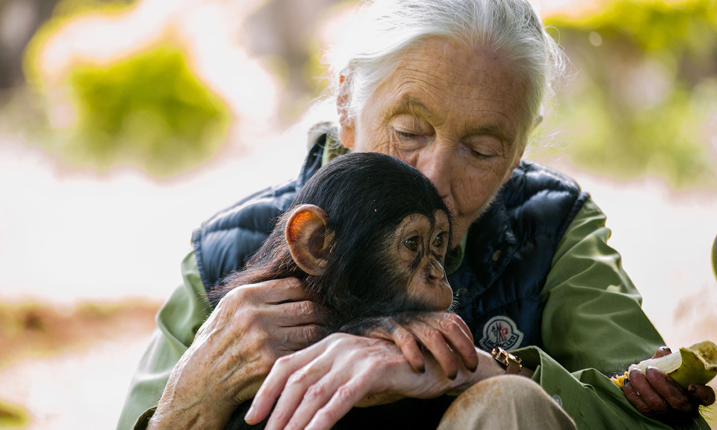 <p>British primatologist Jane Goodall. <em>Photo by Sumy Sadurni/AFP/Getty</em></p>