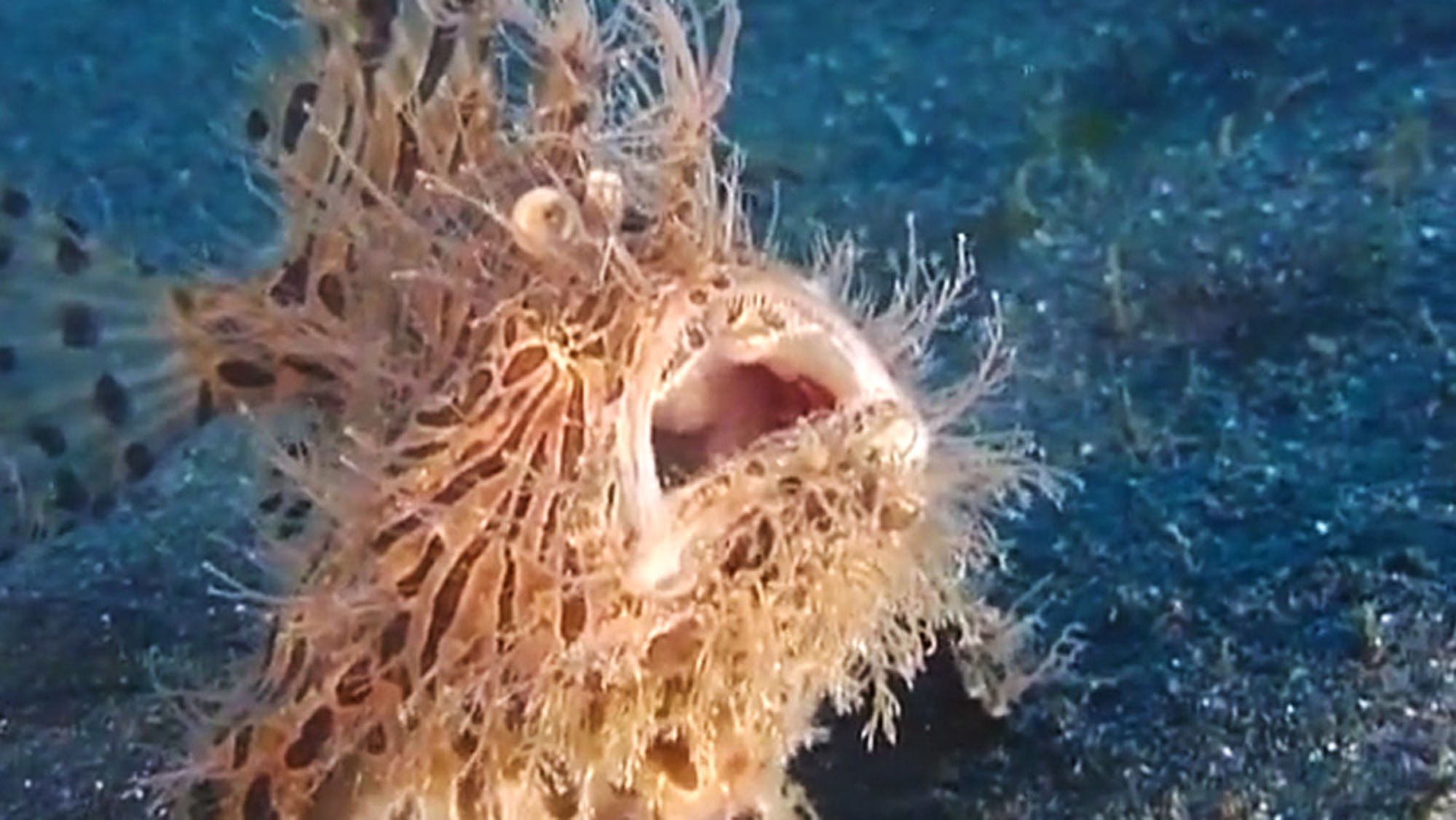 essay about frogfish