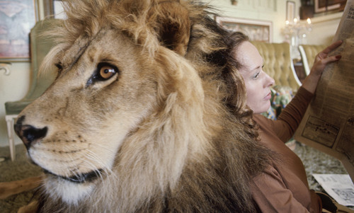 Teleological behaviourism or what it means to imagine a lion   Aeon