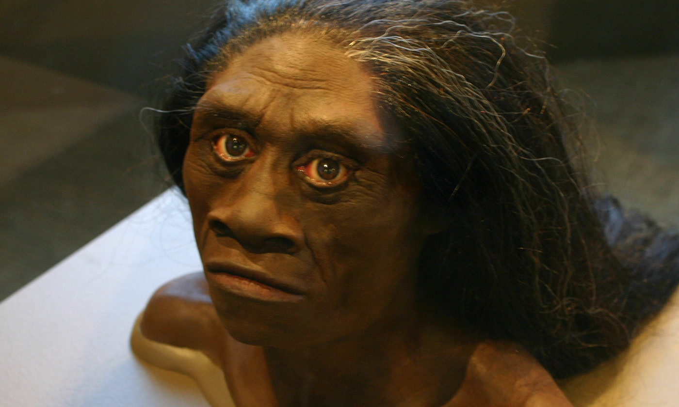 <p><em>Homo floresiensis</em> model at the David H Koch Hall of Human Origins at the Smithsonian National Museum of Natural History. <em>Photo by Ryan Somma/Flickr</em></p>