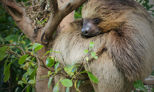 Down with the larks: on the virtues of sleeping like a sloth | Aeon