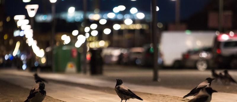 Evolving street-smarts