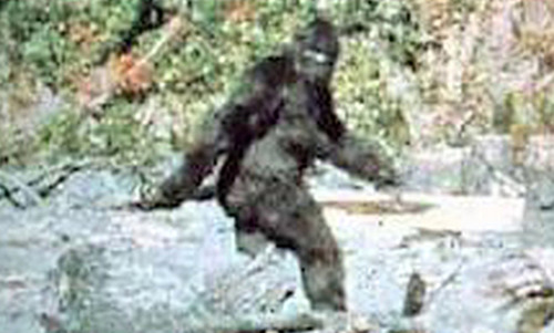 Why Sasquatch and other crypto-beasts haunt our imaginations   Aeon