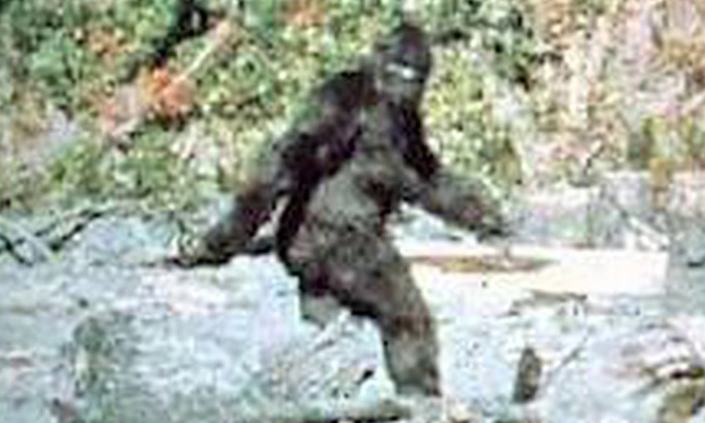 Sasquatch dreams. Frame 352 from the 1967 Patterson–Gimlin film. <em>Photo courtesy Wikipedia</em>